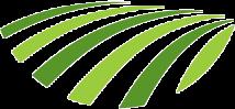 آوان گیاه سبز پارسیان