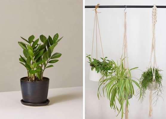 گیاه مناسب اتاق خواب ، این ۶ گلدان را در خوابگاه فراموش نکنید!