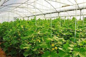 تولید محصولات کشاورزی با کیفیت بالا ممکن شد