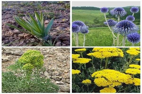 استارتاپهای منتخب گیاهان دارویی زیر چتر حمایتی قرار میگیرند
