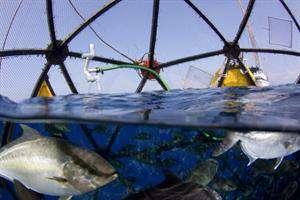 کسبوکارهای جدید زیستی دریایی به میدان میآیند