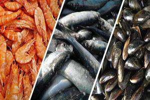 تولید غذاهای دریایی شتاب گرفت