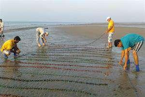 تولید انبوه جلبکهای دریایی ممکن شد