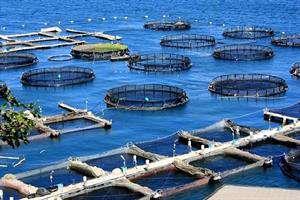 سفره زیستفناوری دریایی گسترده میشود
