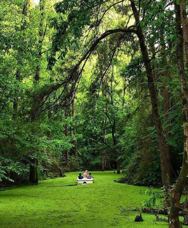 پارک جنگلی سراوان رشت از جنگل های کهن ایران