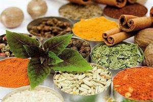 شتابدهندههای تخصصی حوزه گیاهان دارویی فعال شدند
