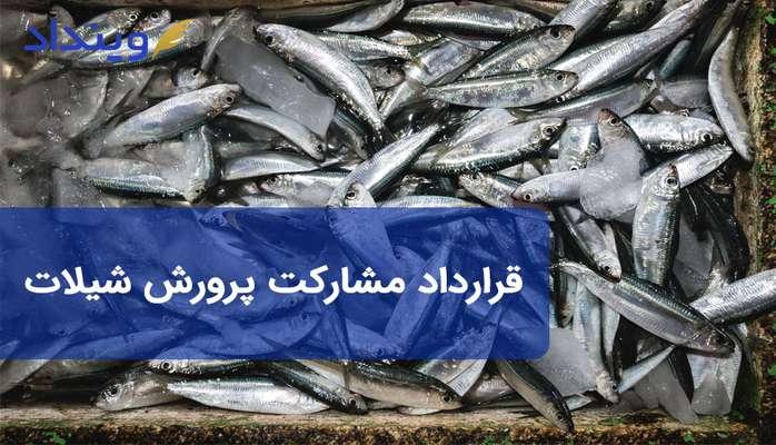 قرارداد مشارکت پرورش ماهی حاوی چه مطالبی است؟