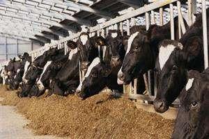 کیفیت تولید دام با روشهای زیستی بالا میرود