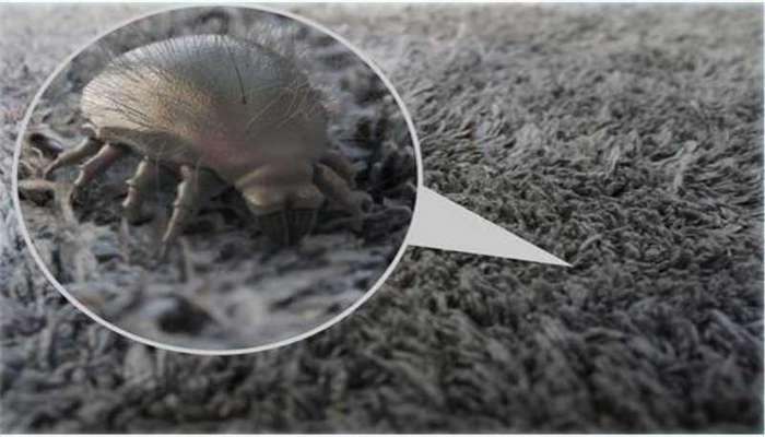 ترفندهای رفع آلرژی به فرش !