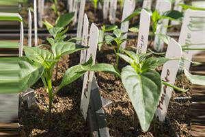 حرکت به سوی کشاورزی مدرن توسط دانشبنیانها سرعت گرفت