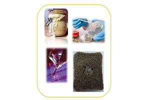 «نان فرسودمند» با باکتریهای بومی تولید شد