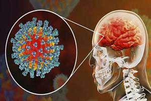 بیش از ۳۰ محتوای آموزشی تولید شد؛ شناخت درست رفتار مغز در بحران کرونا