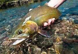 تغذیه ماهی های پرورشی             تغذیه ماهی های پرورشی             تغذیه ماهی های پرورشی