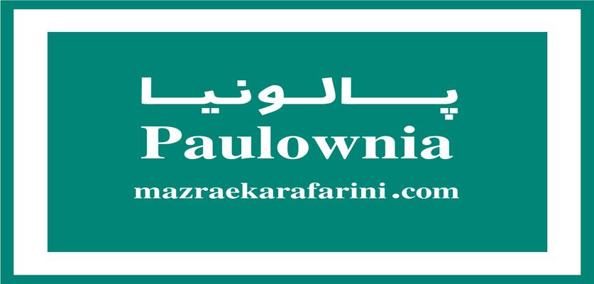 پالونیا چیست؟ آشنایی با درخت پالونیا درخت ارزش آفرین این روزها