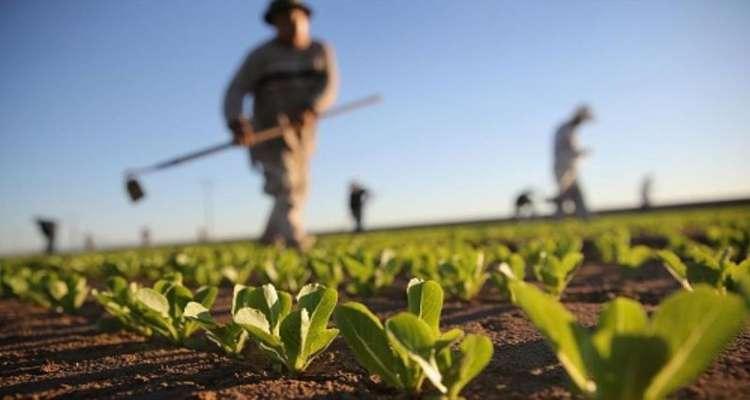 فهرست کالاها و نهادههای وارداتی بخش کشاورزی در سالهای ۹۷ و ۹۸ اعلام شد
