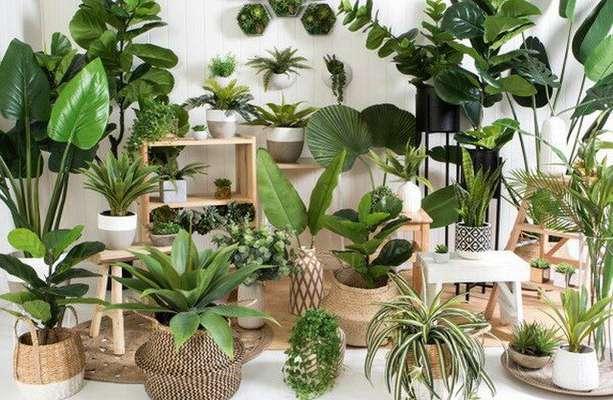 آفات گیاهان آپارتمانی             آفات گیاهان آپارتمانی             آفات گیاهان آپارتمانی
