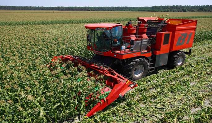 روشهای برداشت ذرت بذری             روشهای برداشت ذرت بذری             روشهای برداشت ذرت بذری