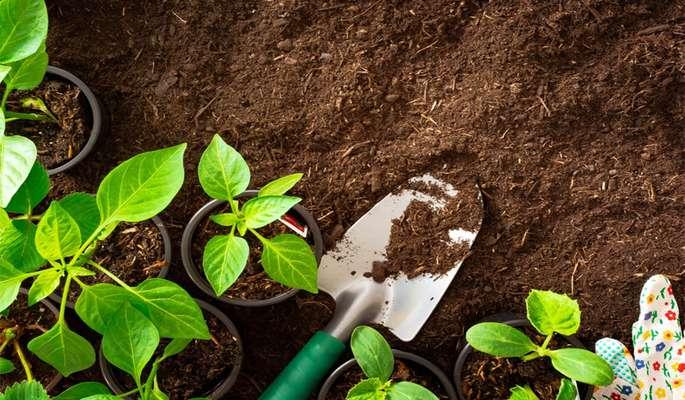 ترکیب خاک مناسب سبزی کاری             ترکیب خاک مناسب سبزی کاری             ترکیب خاک مناسب سبزی کاری