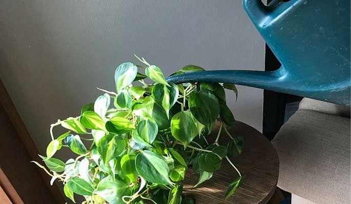 مزایای کود سه بیست برای گیاهان آپارتمانی             مزایای کود سه بیست برای گیاهان آپارتمانی             مزایای کود سه بیست برای گیاهان آپارتمانی