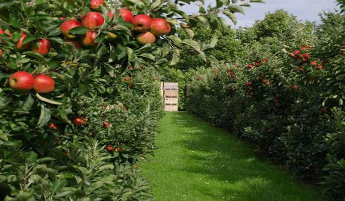 درختان مناسب اقلیم لواسان             درختان مناسب اقلیم لواسان             درختان مناسب اقلیم لواسان