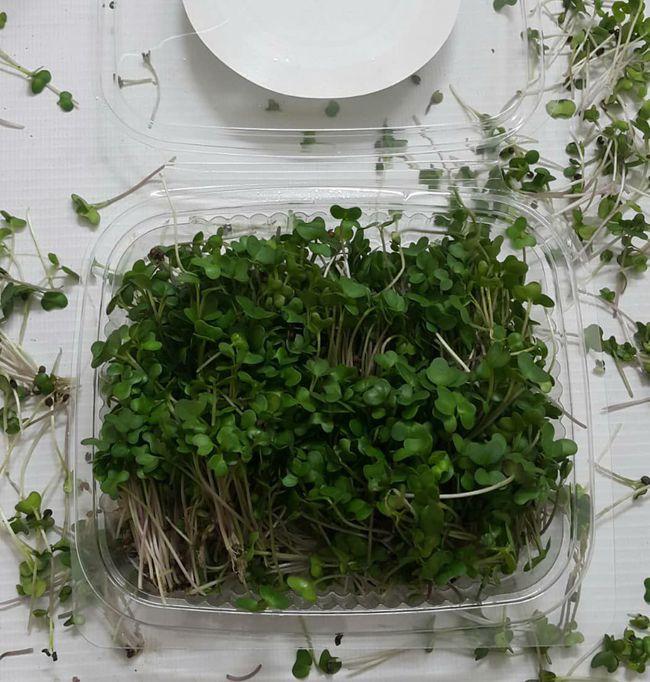 تولید میکروگرین ها (سبزیجات مغذی ) با ارزش غذایی ۴ الی ۴۰ برابر سبزیجات معمولی
