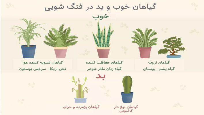 گیاهان خوب و گیاهان بد از دیدگاه فنگ شویی