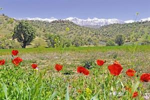 حفاظت از گونههای گیاهی با انتشار نقشه پراکنش ۲۷ استان