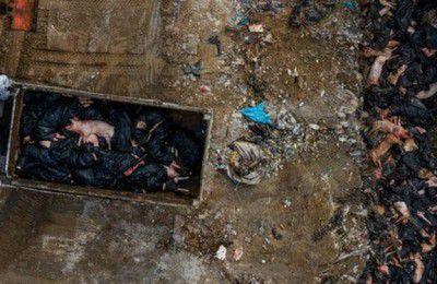 نگرانی درباره کمبود غذا با فراگیر شدن بزرگترین اپیدمی تب خوکی تاریخ در چین