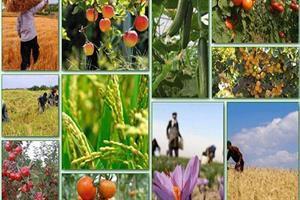 استفاده مطلوب از صنایع تبدیلی محصولات کشاورزی