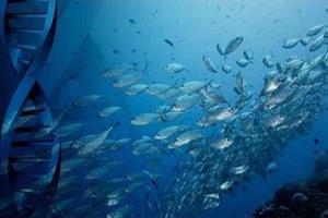 محصولات زیستفناوری دریا تجاریسازی میشود