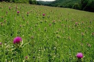 کاربردهای بومی گیاهان دارویی روستاها به داستانهایی کوتاه تبدیل شد