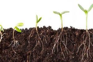 سهم کودهای زیستی در سبد کشاورزی بیشتر میشود