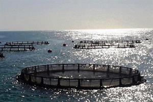 پرورش ماهی در قفس گامی بلند به پیش رفت