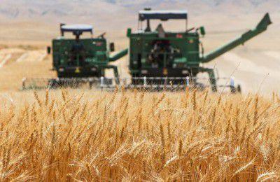 مانع مهمی که بر سر راه خودکفایی محصولات استراتژیک کشاورزی گذاشته میشود