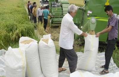 لغو ممنوعیت فصلی واردات برنج در سال جاری+سند