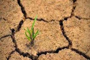 محصولات کشاورزی به تنش شوری و خشکی مقاوم میشود