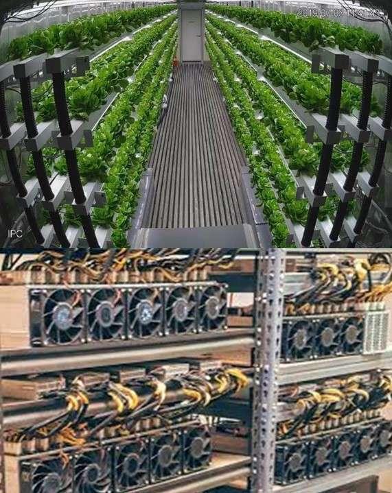 فراموشی اولویت ها در کشور: کشاورزی یا ارزرمز(cryptocurrency)