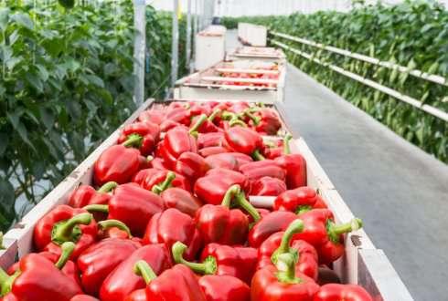 استارت آپ ها وارد کشاورزی شوند، شکست سیاستهای کشاورزی ایران
