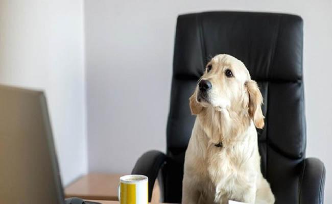 راهیابی سگها به شرکت آمازون